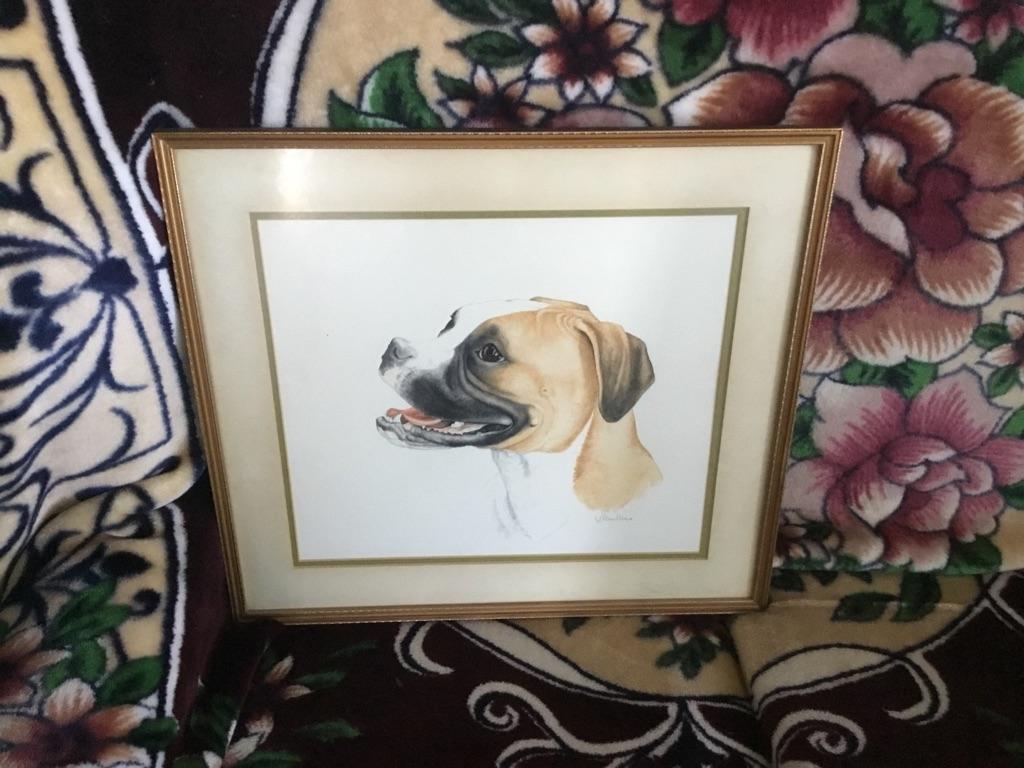 Watercolour of a bull mastiff dog signed