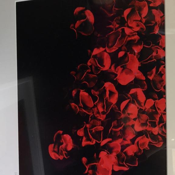 Ceramic Poppies 2014 Photograph