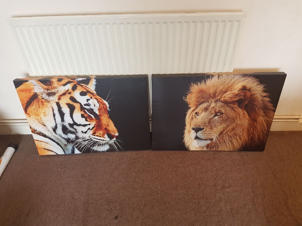 Beautiful Lion & Tiger A1 Canvas for Sale!