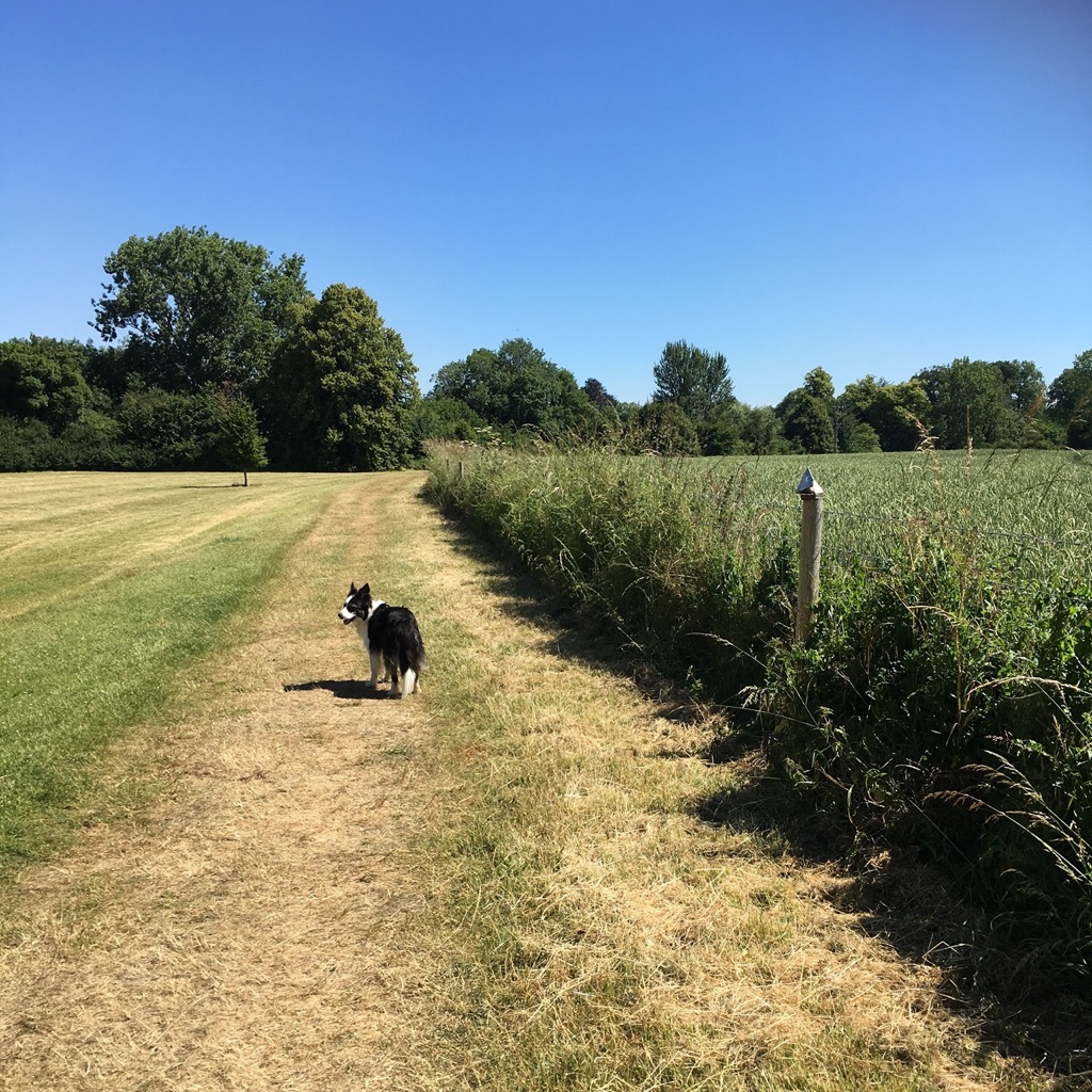 Faringdon Animal Care