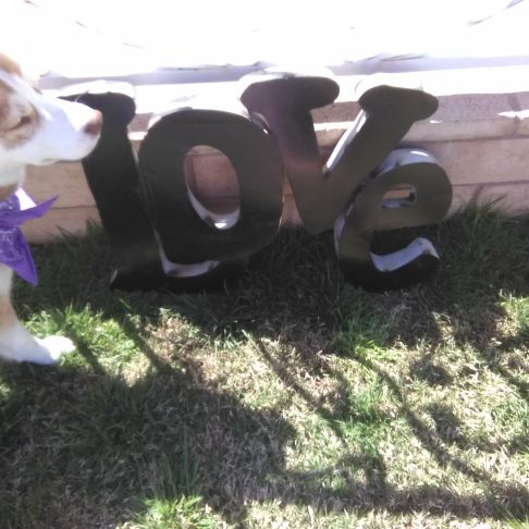Love signsp