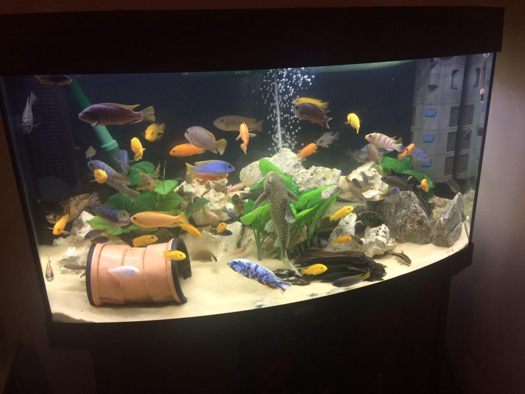 Juwel vision 180L fish tank with LED lights