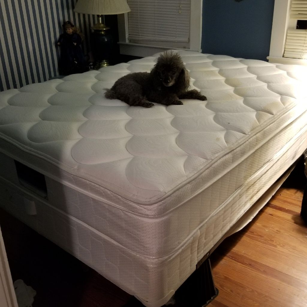 EIGHT MONTH OLD SEALY PILLOWTOP FULL SIZE MATTRESS