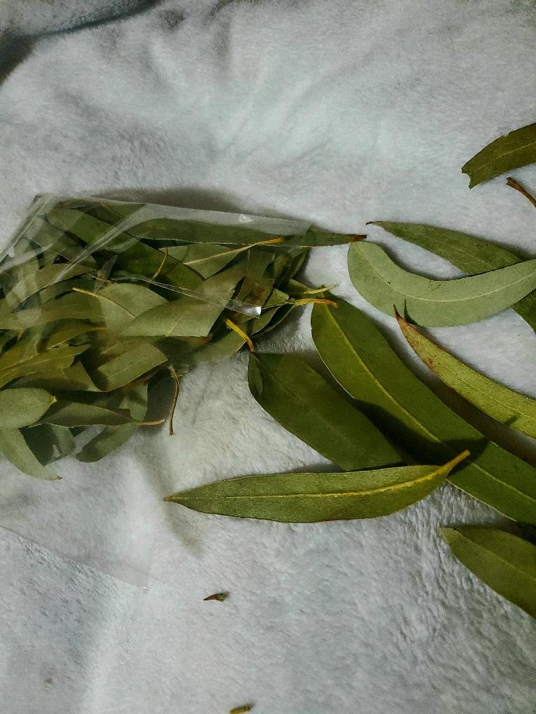 Eucalyptus leaves health benefits