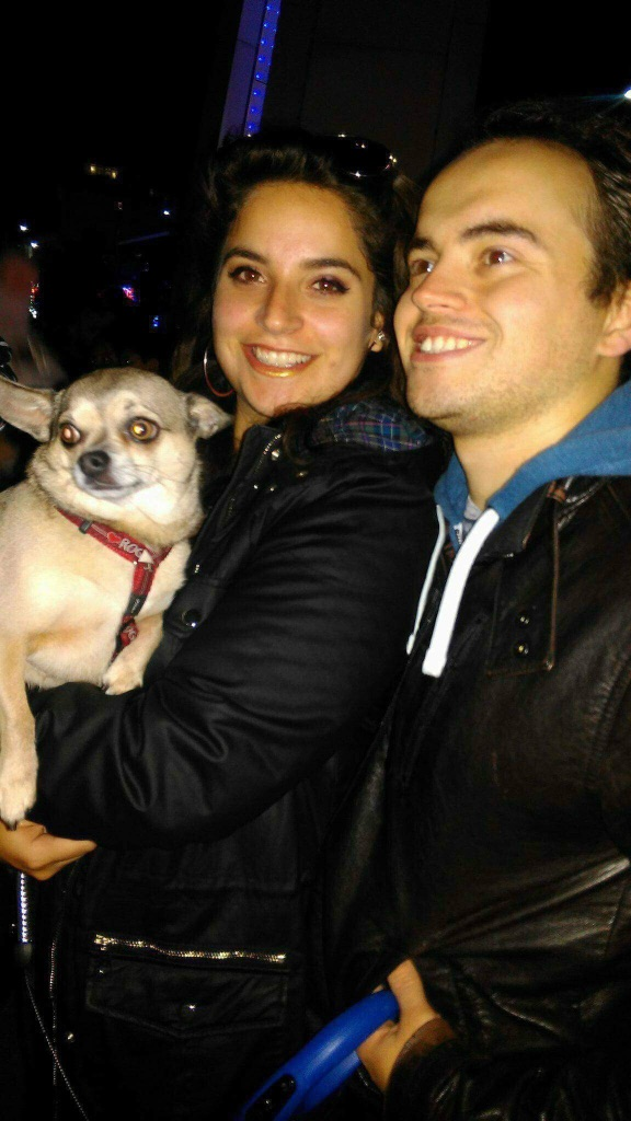 The Chihuahua Sitter-Southend on sea Dog Boarding and Daycare