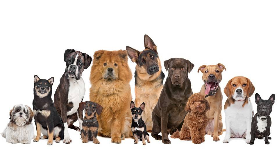 Stockport dog walking and sitting services