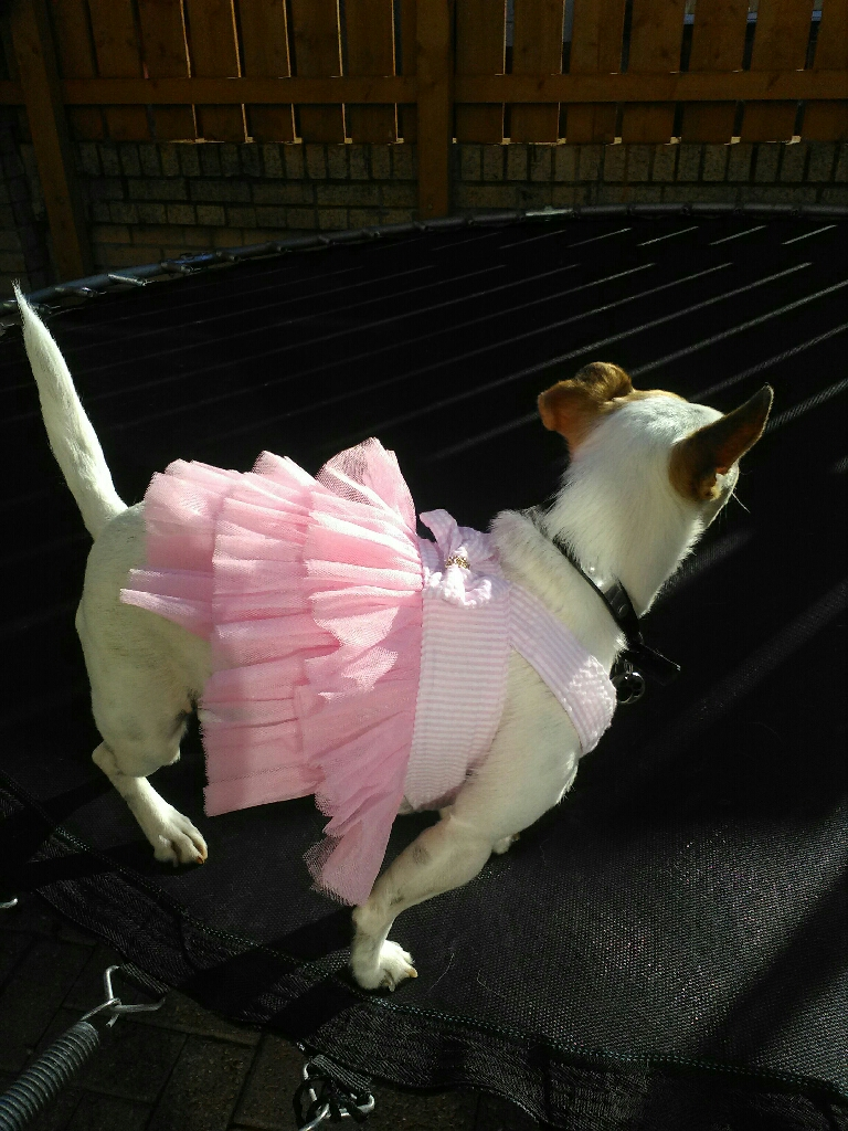 Dog/cat pink dresses gift wrapped
