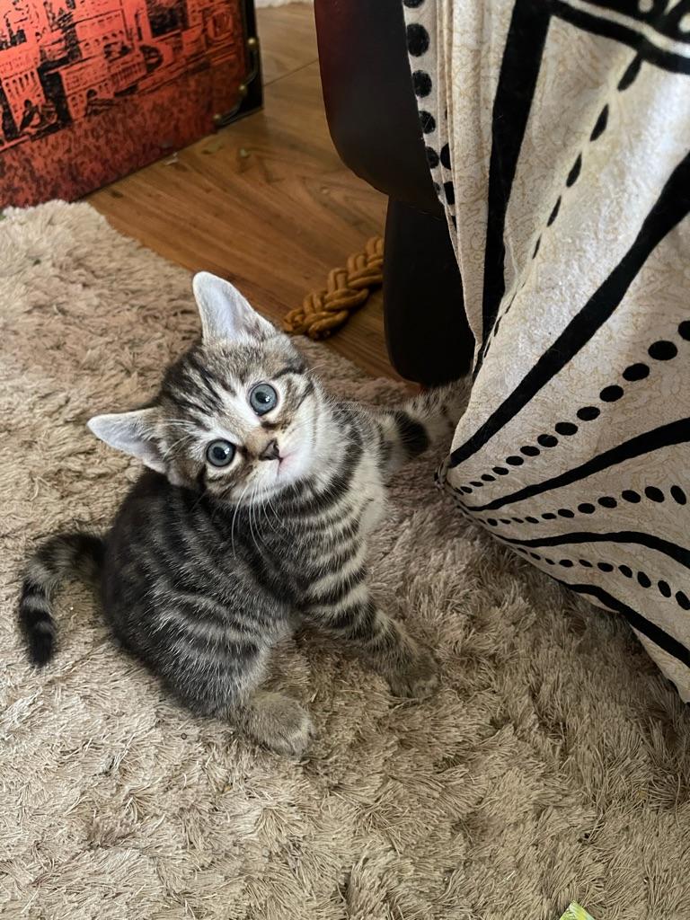 Bengle x kittens