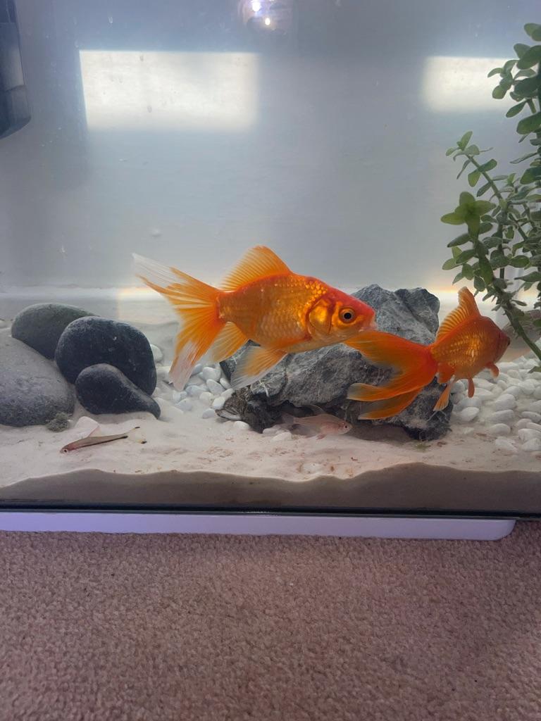 Fish tank +