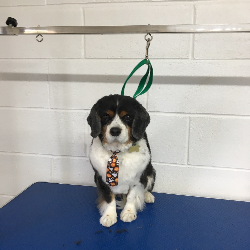 Many Paws Dog Grooming