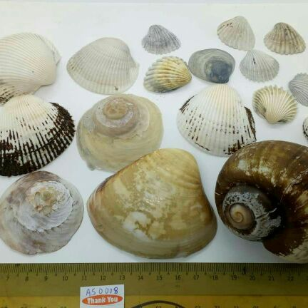 Aquatic Shell for Aquarium Tank