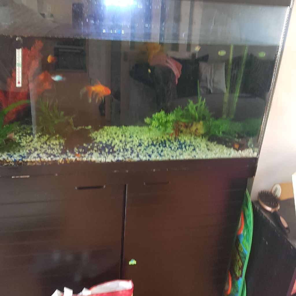 Red sea 250lt tank and unit