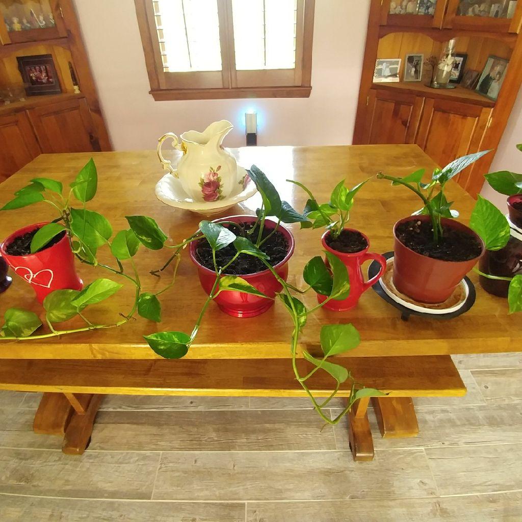 Live plants $10 each